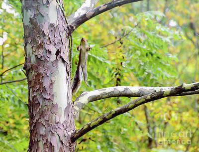 Squirrel Photograph - Jump To It - Squirrel Jump by Kerri Farley
