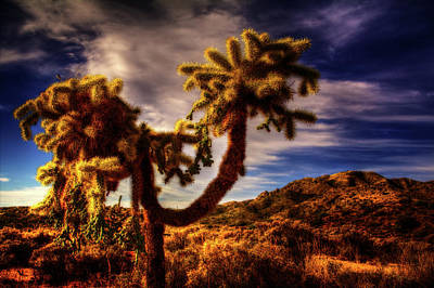 Photograph - Jumping Cholla Cactus by Roger Passman