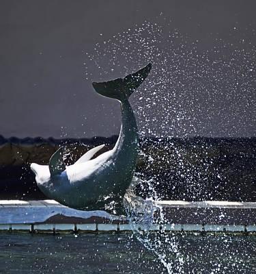 Photograph - Jumping Dolphin by Pamela Walton