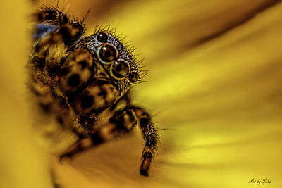Photograph - Jumping Spider by Lilia D