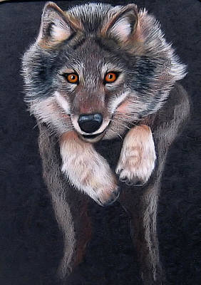 Drawing - Jumping Wolf by Lorraine Foster