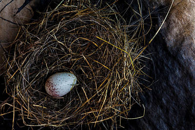 Photograph - Junco Bird Nest And Egg by Carol Leigh
