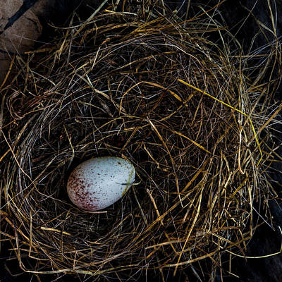 Photograph - Junco Bird Nest And Egg Square Version by Carol Leigh