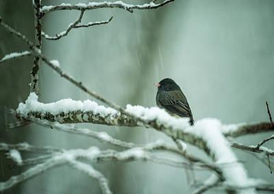 Photograph - Junco Enjoying The Snow Flying by Douglas Barnett