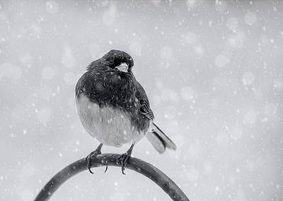 Photograph - Junco In Winter by Cathy Kovarik