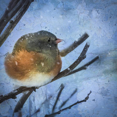 Art Print featuring the digital art Junco On Winter Day by Christina Lihani
