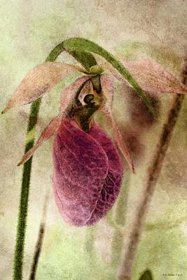 Photograph - June Lady Slipper by WB Johnston