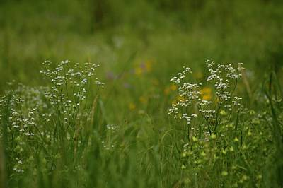 Photograph - June Meadow by Tim Good