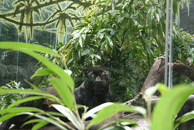 Photograph - Jungle Beauty At The Bronx Zoo by Aggy Duveen