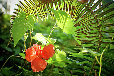 Photograph - Jungle Begonia by Adria Trail