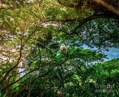 Photograph - Jungle Canopy Kauai Hawaii by Blake Webster