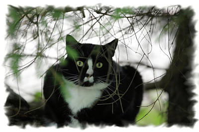 Photograph - Jungle Cat by Karol Livote