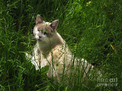 Photograph - Jungle Cat by Sandy McIntire