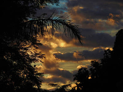 Photograph - Jungle Daybreak by Mark Blauhoefer
