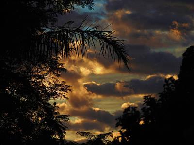 Photograph - Jungle Daybreak by Mark Blauhoefer