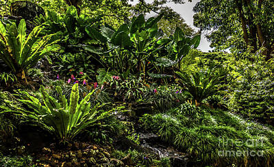 Photograph - Jungle Garden Stream Kauai Hawaii by Blake Webster