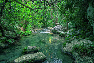 Photograph - Jungle In Sicily by Emilio Messina