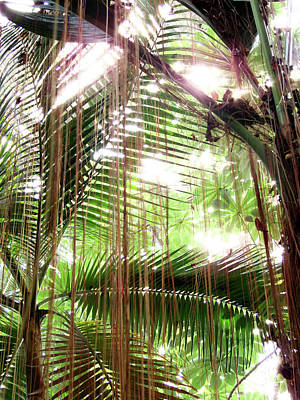 Photograph - Jungle In There by Mark Holbrook