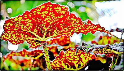 Art Print featuring the photograph Jungle Leaf by Mindy Newman