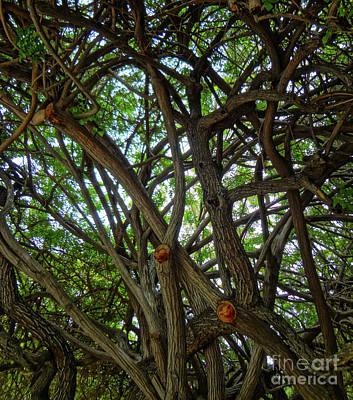 Photograph - Jungle Maze by Gem S Visionary