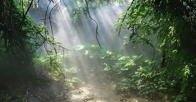 Photograph - Jungle Mist by Dan Sproul