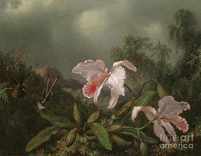 Comet Painting - Jungle Orchids And Hummingbirds, 1872  by Martin Johnson Heade