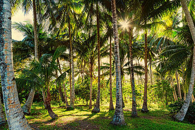 Photograph - Jungle Paradise Sunshine by James BO Insogna