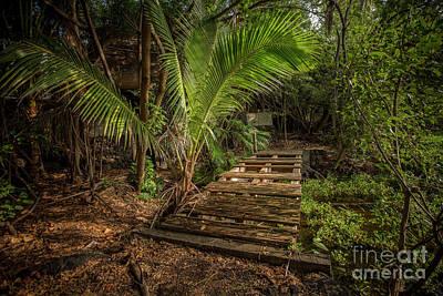 Photograph - Jungle Relics 2 by Daniel Knighton