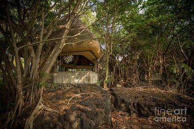 Photograph - Jungle Relics 3 by Daniel Knighton
