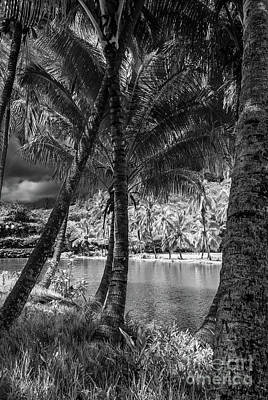 Photograph - Jungle River Palms by Blake Webster