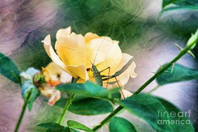 Photograph - Jungle Rose by Joan Bertucci