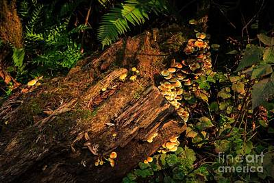 Photograph - Jungle Rot by Jon Burch Photography