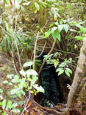 Photograph - Jungle Stream by Francesca Mackenney