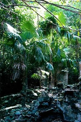 Jungle Sun  Art Print