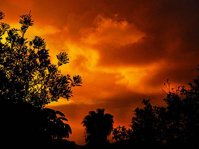 Photograph - Jungle Sunset by Mark Blauhoefer