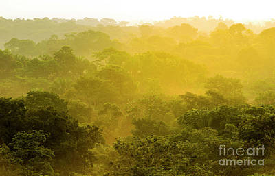 Photograph - Jungle Sunset Treetops by Tim Hester