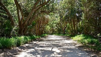 Photograph - Jungle Trail by Carol Bradley
