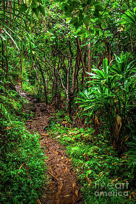 Photograph - Jungle Trail Na Pali Coast Kauai Hawaii by Blake Webster