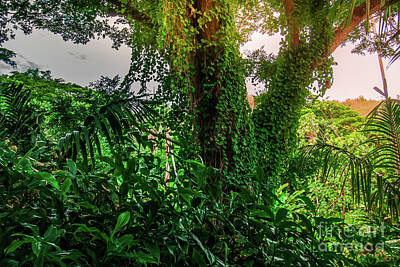 Jungle Vines Kauai Hawaii Art Print by Blake Webster
