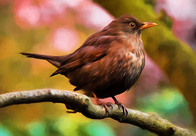 Photograph - Jung's Throttle Bird by Georgiana Romanovna