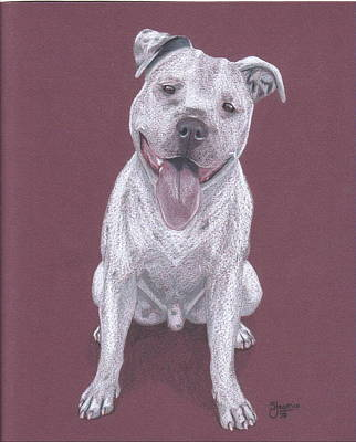 Pit Bull Drawing - Junior by Stacey Jasmin