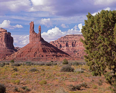 Photograph - Juniper And Butte by Tom Daniel