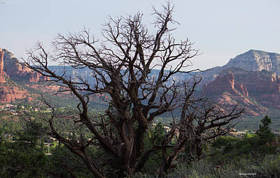Photograph - Juniper At Sunrise Sedona by Roberta Byram