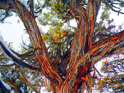 Photograph - Juniper Bark by Deborah Moen