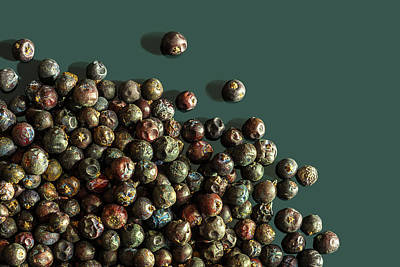 Photograph - Juniper Berries by Peter V Quenter