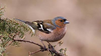 Juniper Bird Art Print
