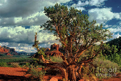 Photograph - Juniper Frames Cathedral Rocks Sedona Arizona by Dave Welling