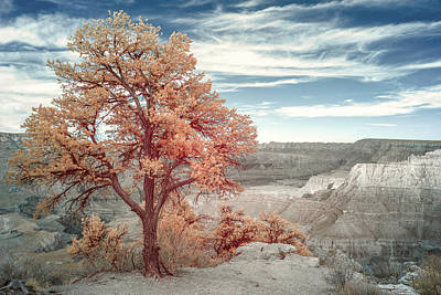 Photograph - Juniper In Grand Canyon by Jon Glaser