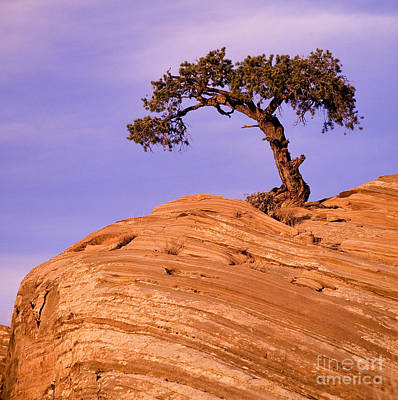 Photograph - Juniper On Sandstone by Len Rue Jr.