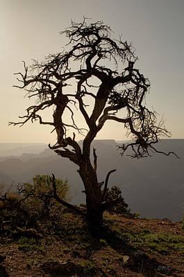 Photograph - Juniper Tree At Grand Canyon by David Gordon
